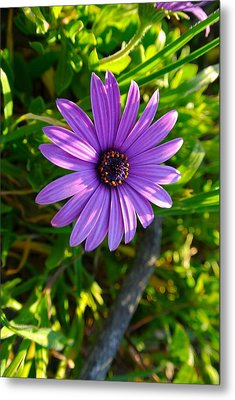 Purple Pleasure Metal Print by Tamara Bettencourt