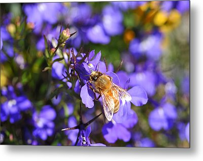 Purple Pollination  Metal Print