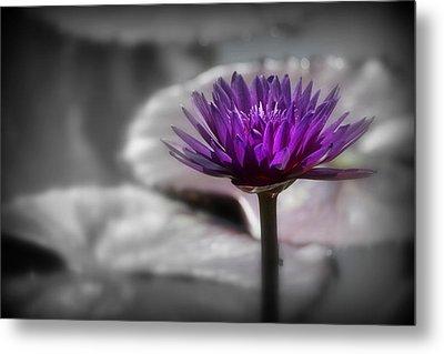 Purple Pond Lily Metal Print by Lynn Sprowl