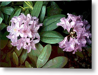 Purple Rhododendron Metal Print