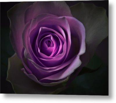 Purple Rose Flower - Macro Flower Photograph Metal Print by Artecco Fine Art Photography