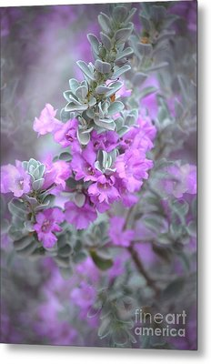 Purple Sage Metal Print by Deb Halloran