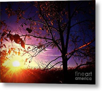 Purple Skies And Walnut Trees Metal Print by Garren Zanker