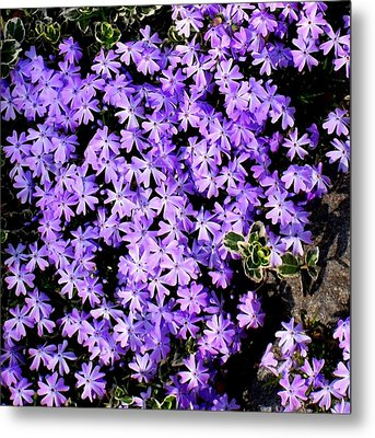 'purple Springtime' Metal Print