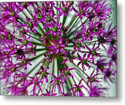 Metal Print featuring the photograph Purple Starlight by Aimee L Maher Photography and Art Visit ALMGallerydotcom