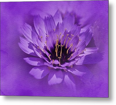 Purple Study Metal Print