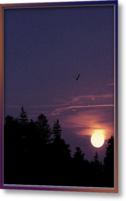 Metal Print featuring the photograph Purple Sunset With Sea Gull by Peter v Quenter