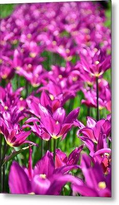 Purple Tulips Metal Print by Gynt
