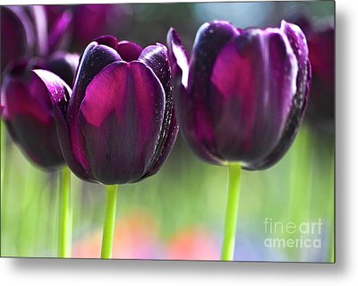Purple Tulips Metal Print by Heiko Koehrer-Wagner