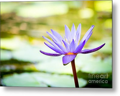 Purple Victoria Regia Metal Print by VistoOnce Photography