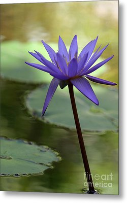 Purple Water Lily In The Shade Metal Print by Sabrina L Ryan