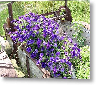 Purple Wave Petunias In Rusty Horse Drawn Spreader Metal Print
