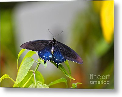 Purple Wings Metal Print