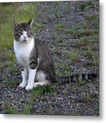 Purr-fectly Posed Metal Print