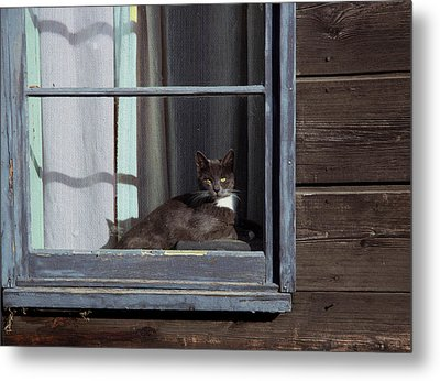 Purrfect Metal Print by Kathy Bassett