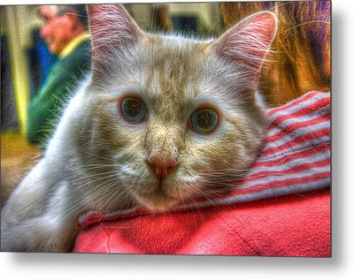 Metal Print featuring the photograph Purrfect Companion by Dennis Baswell