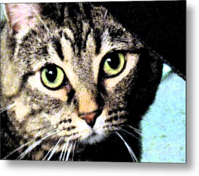 Metal Print featuring the photograph Purrfectly Bright Eyed by Nina Silver