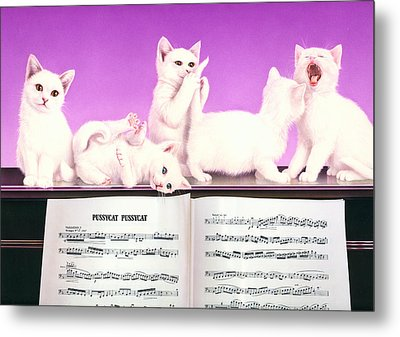 Pussy Cat Pussy Cat Metal Print