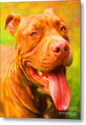 Pit Bull Portrait Metal Print by Iain McDonald