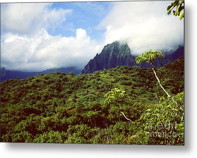 Puu Piei Trail Koolau Mountains Metal Print by Thomas R Fletcher