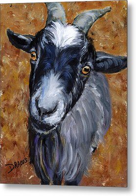 Pygmy Goat Looking Up Metal Print by Dottie Dracos