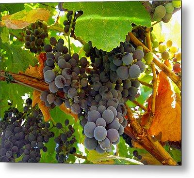 Pyrenees Winery Grapes Metal Print