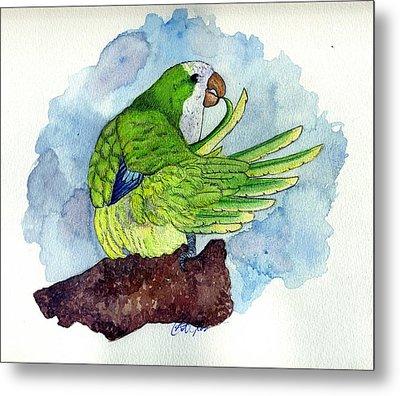 Quaker Parakeet Bird Portrait   Metal Print by Olde Time  Mercantile
