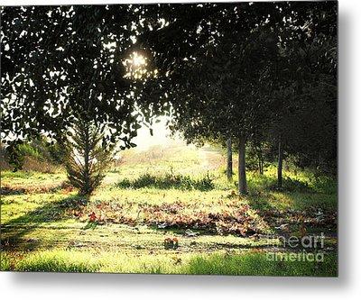 Metal Print featuring the photograph Quarry Lakes Sunrise by Ellen Cotton