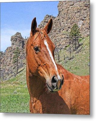 Quarter Horse Portrait Montana Metal Print by Jennie Marie Schell