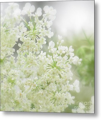 Metal Print featuring the photograph Queen  Anne Lace by France Laliberte