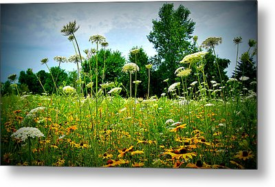 Queen Annes Lace Of The Butterfly Gardens Of Wisconsin Metal Print by Carol Toepke