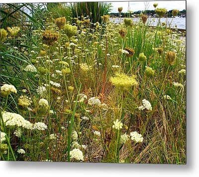Queen Anne's  Lace Riverfront  Metal Print by Rick Todaro