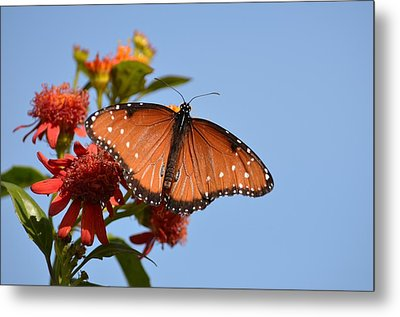 Metal Print featuring the photograph Queen Butterfly by Debra Martz