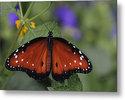 Queen Butterfly Metal Print by Penny Lisowski