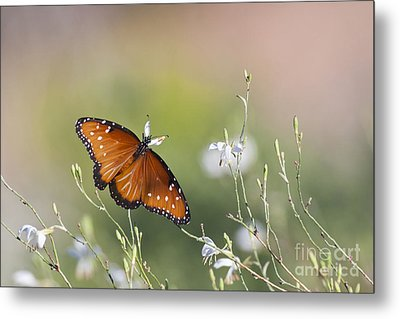 Metal Print featuring the photograph Queen In Morning Light by Ruth Jolly