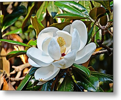 Queen Of The South Metal Print by Linda Brown