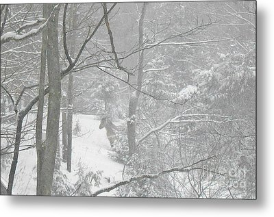 Querida In The Snow Storm Metal Print by Patricia Keller