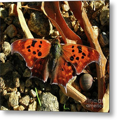 Metal Print featuring the photograph Question Mark Butterfly by Donna Brown