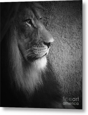 Metal Print featuring the photograph Quiet Majesty by Julie Clements