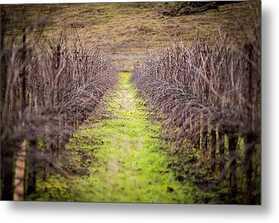 Quiet Vineyard Metal Print