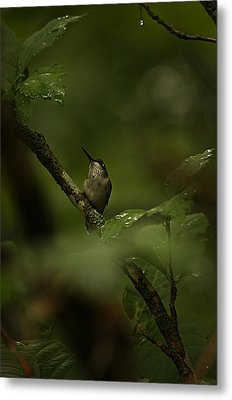 Metal Print featuring the photograph Quietly Waiting by Tammy Schneider