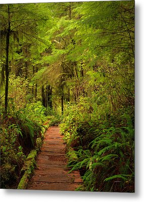 Quinualt Rain Forest Path Metal Print