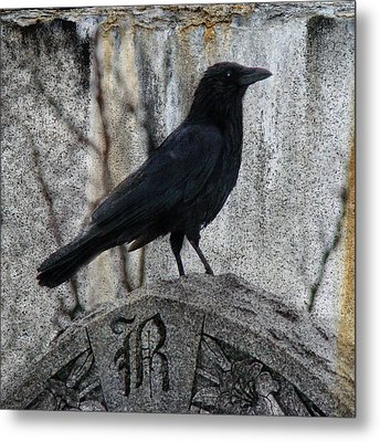 R Is For Raven Metal Print by Gothicrow Images
