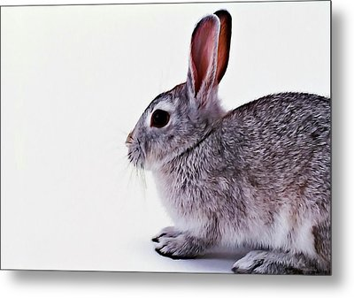 Rabbit 1 Metal Print by Lanjee Chee