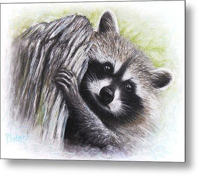Raccoon  Metal Print by Patricia Lintner