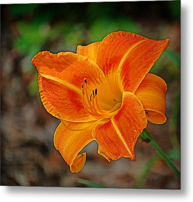 Metal Print featuring the photograph Radiant Orange by Linda Brown