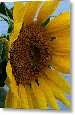 Rahab's Sunflower Metal Print by Jeff Iverson