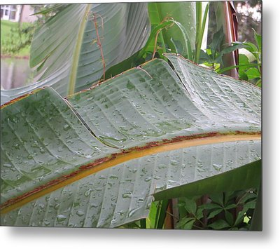 Metal Print featuring the photograph Rain Drops Keep Falling On Me by Jean Marie Maggi