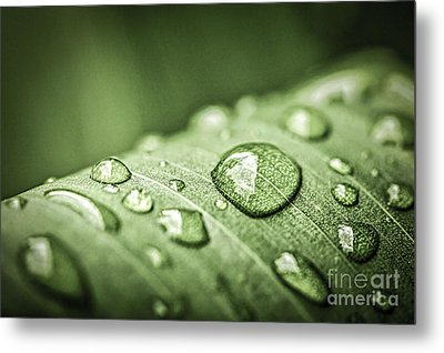 Rain Drops On Green Leaf Metal Print