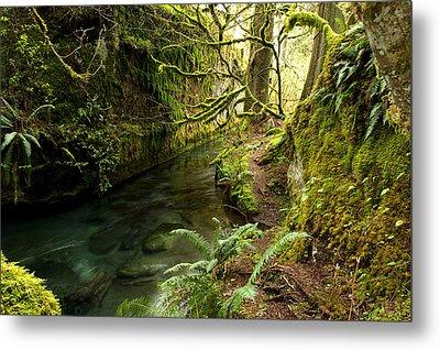 Rain Forest 2 Metal Print by Randy Giesbrecht